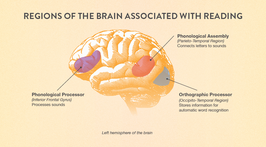 Regions of the brain associated with reading.